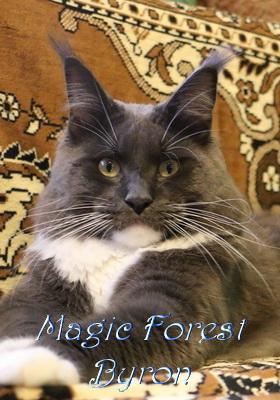 Кот Мейн кун Magic Forest Byron